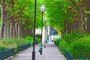 Avenue_Rene_Coty_Paris.jpg